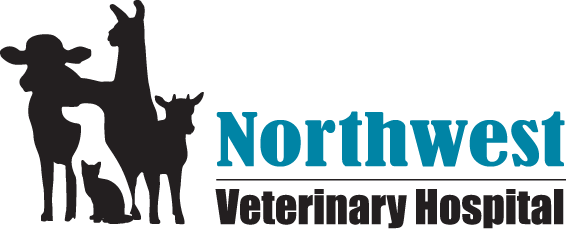 Northwest Veterinary Hospital | Veterinarian Delta Ohio